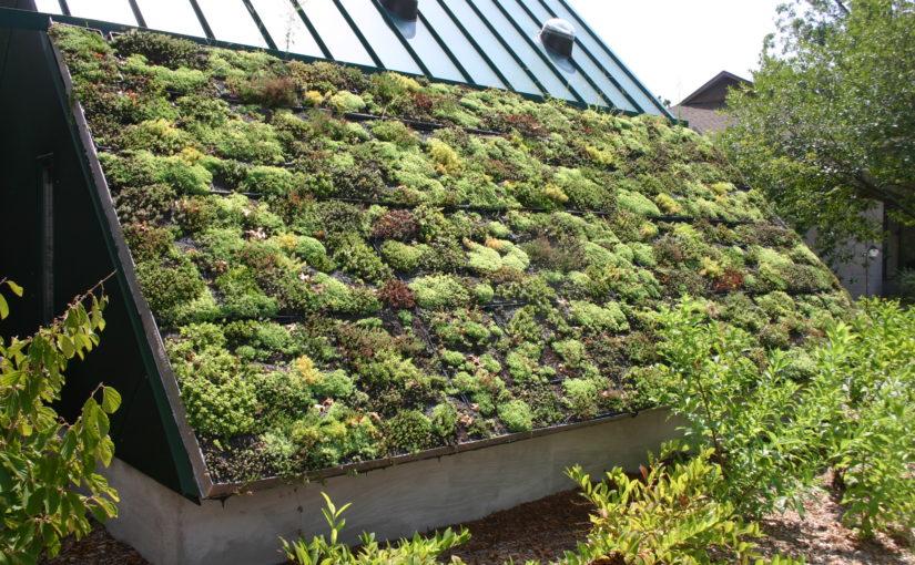 Estetyczne zielone dachy